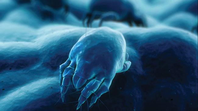 dust-mites-in-mattresses-feat
